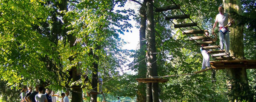 accrobranche arbre